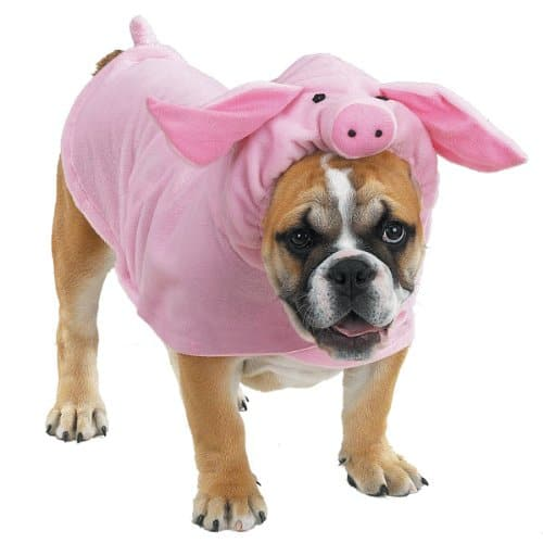 Casual Canine Polyester Piggy