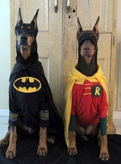 Matching Dog Costumes-Batman and Robin