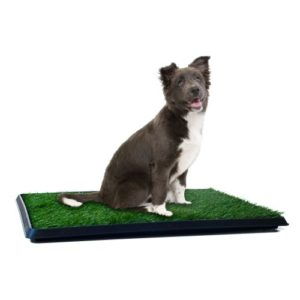 Dog Pee Grass Patch -Train Your Dog to Go on the Grass
