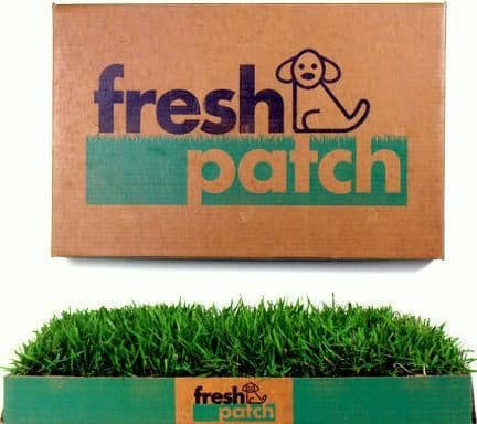 Fresh Patch is great for apartments or inside dogs