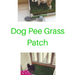 Dog Pee Grass Patch