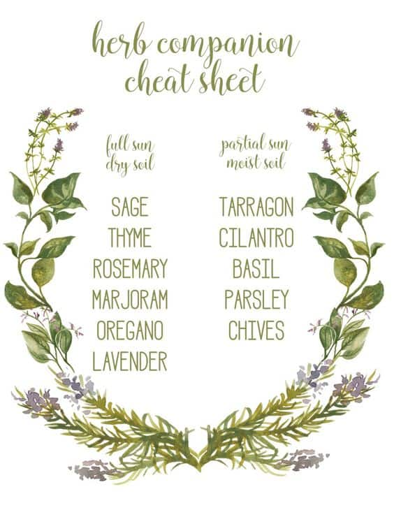 Tips for Growing Herbs- Companion Chart