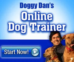 Dog-Online-Training