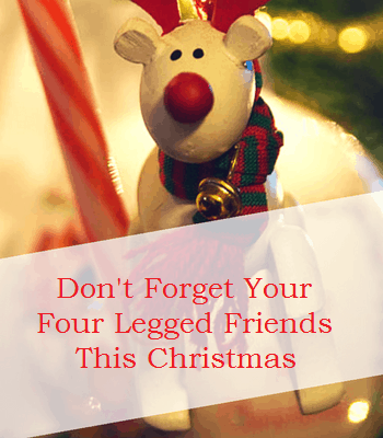 Don't forget your four legged friends this Christmas